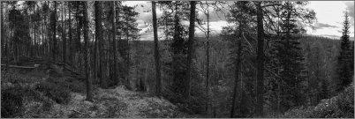 0565 - Metsä ja joki - mv - HD