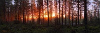 0650 - Uinuva metsä - HD