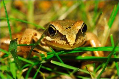 0162 - Hei sammakko